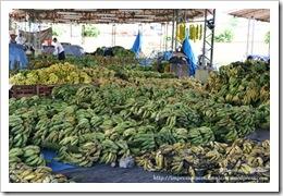 2008 10 Mercado do Produtor (14)