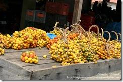 2008 12 mercado produtor (5)