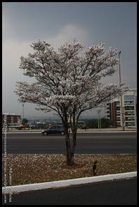 10 10 Brasília (12)