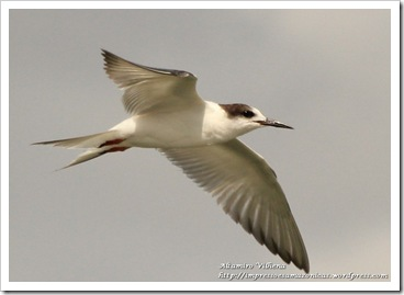 IMG_1040a